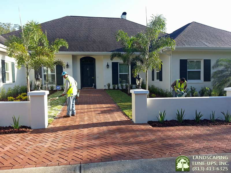 Tampa landscaping for new home construction call 813 for Home builder company