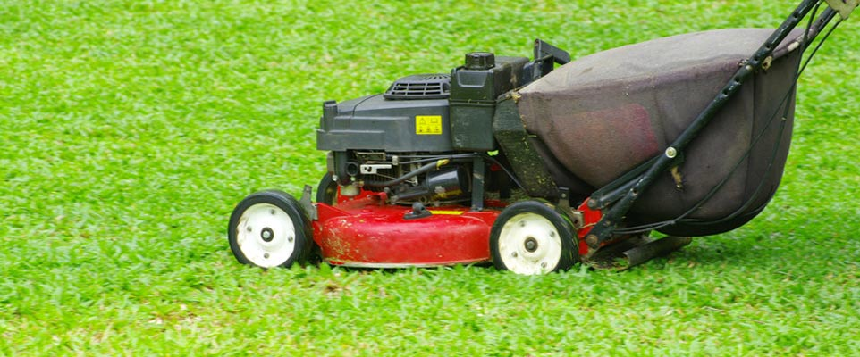 Landscaper Tampa Mowing Instructions for New Sod
