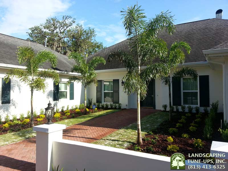 Landscapers Tampa Care Instructions for New Landscaping