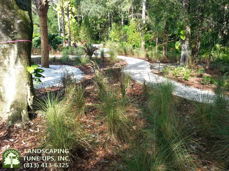 Landscape design Tampa contractor LTU created a park like yard for this home - (813) 413-6325