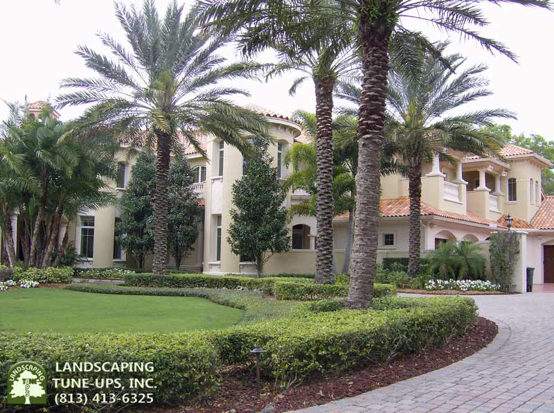 Tampa Landscaping for New Home Construction - Call Landscaping Tune-Ups, Inc. (813) 413-6325
