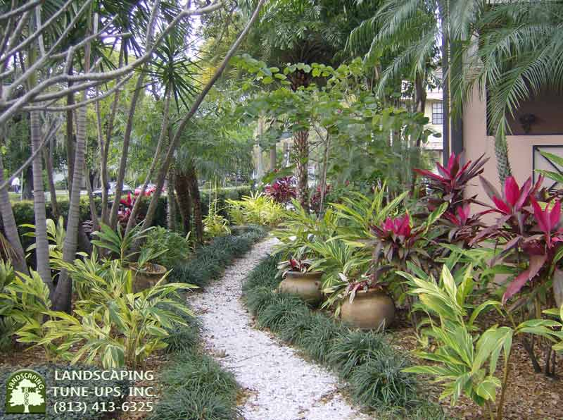 Landscaping Tampa experts LTU can redesign your yard and bring it back to life - (813) 413-6325