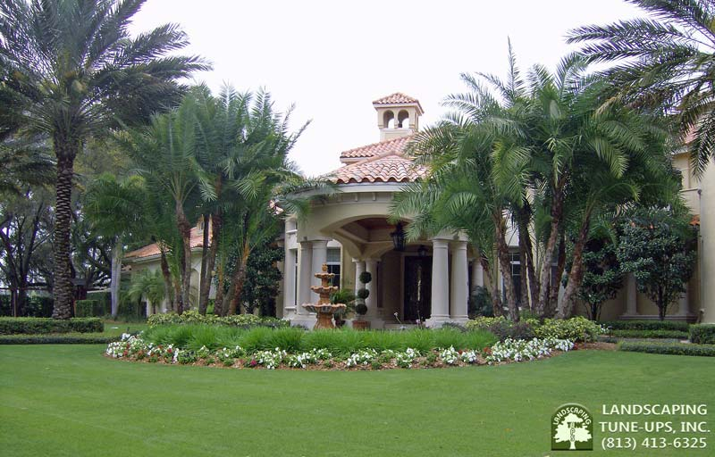 Tampa Bay Landscapers Landscaping Tune-Ups, Inc. Make The Front Elevation of This New Home Gorgeous With Flower Beds and Palms - (813) 413-6325