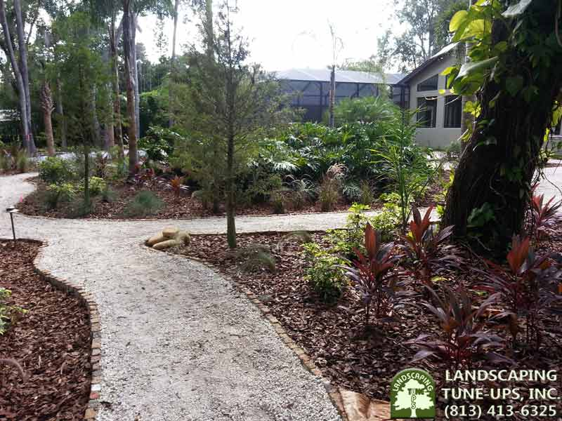 Tampa Bay Landscaping experts LTU create a path and gorgeous landscape for this backyard - (813) 413-6325