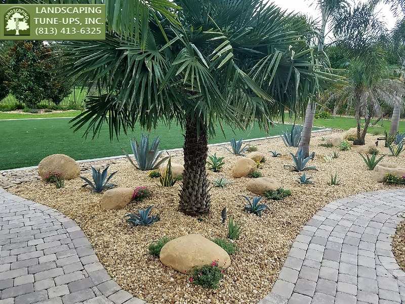 Landscaping Design Tampa by Landscaping Tune Ups