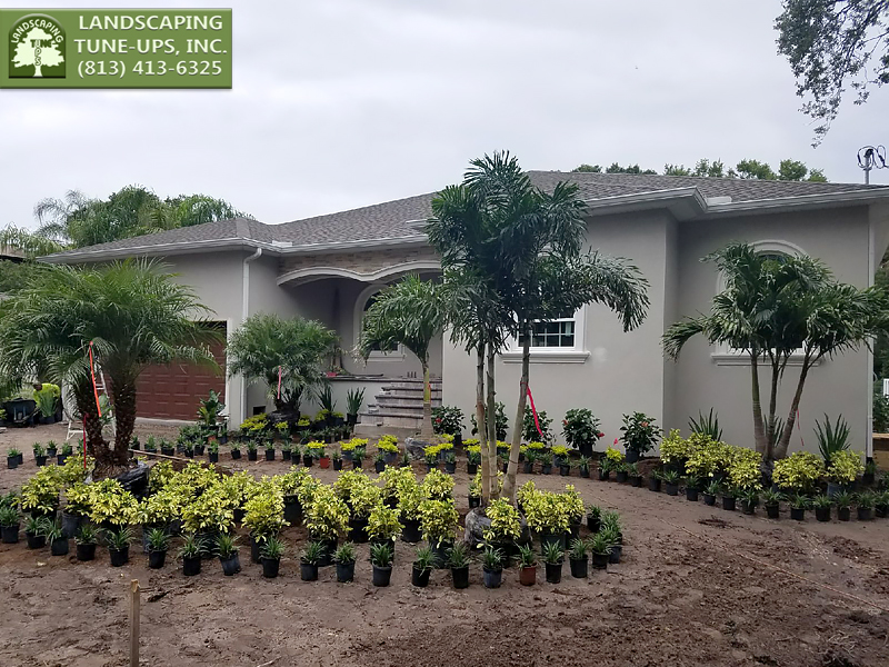 Landscaping New Construction Home Tampa