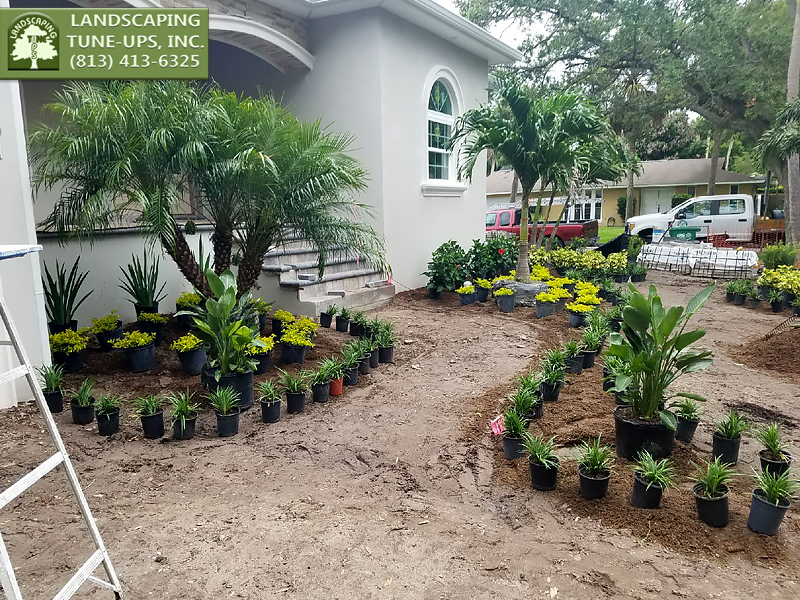 New Home Landscaping Tampa