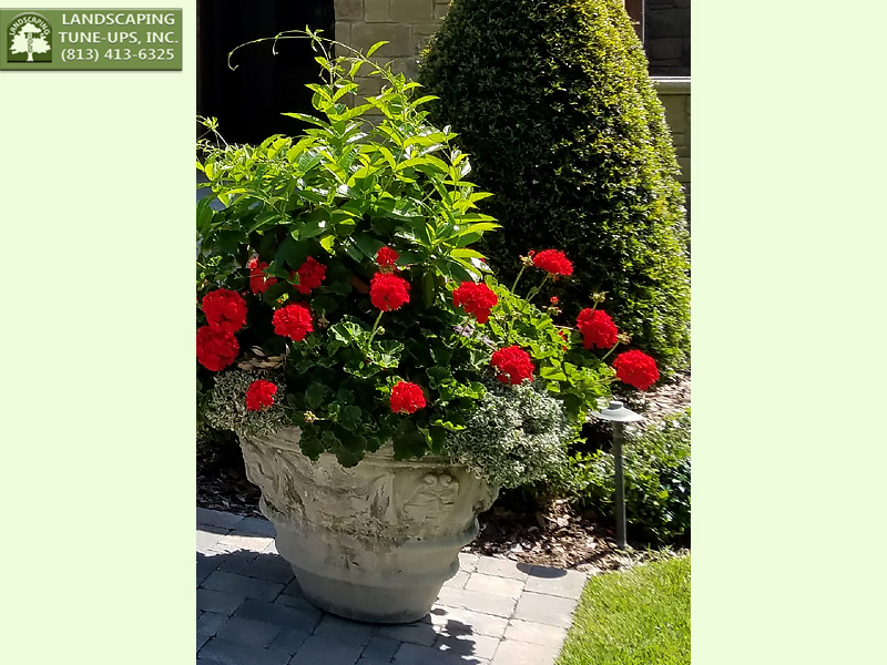 Tampa Landscaping Design Potted Plants