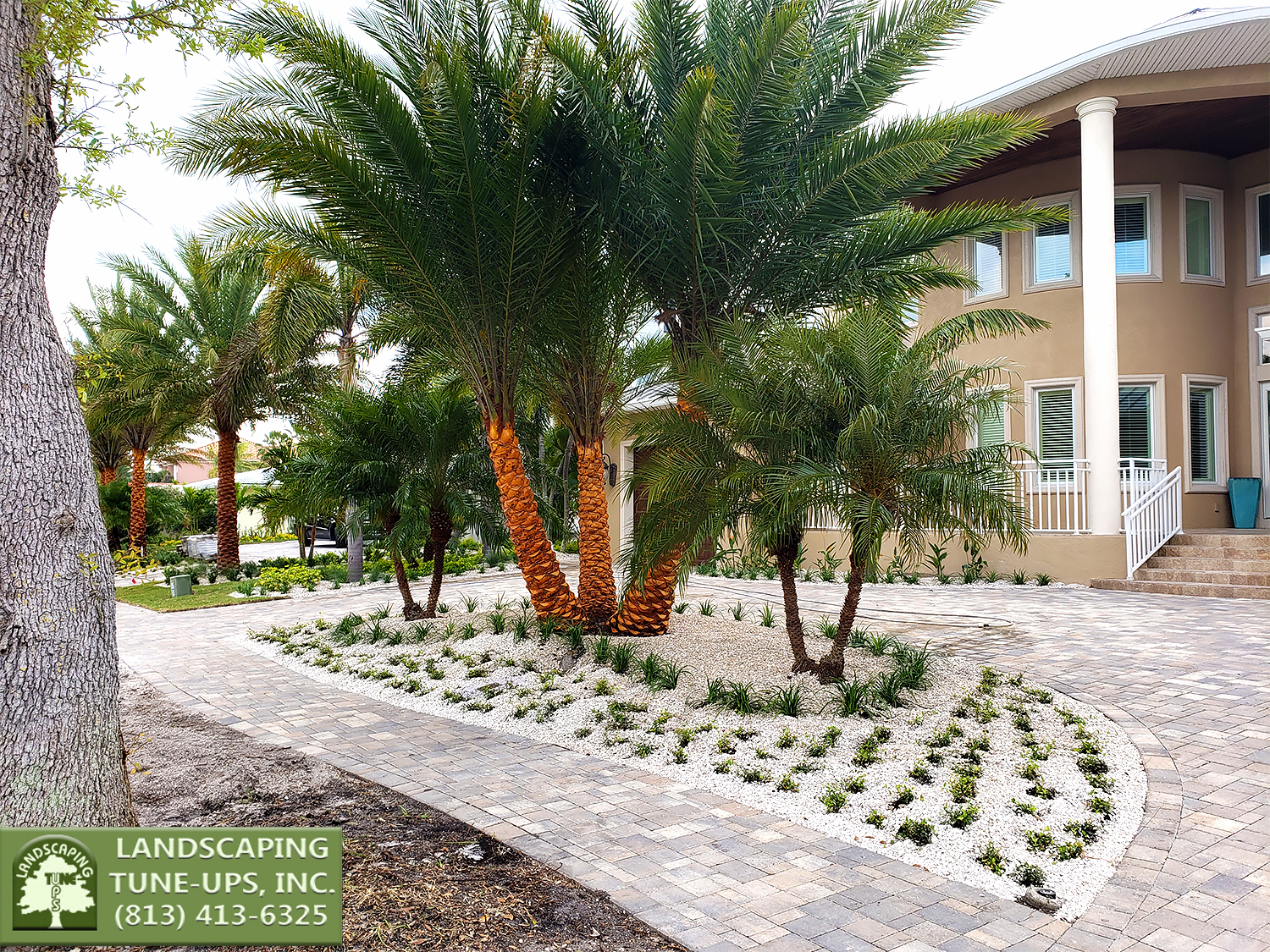 Landscape Contractor Tampa